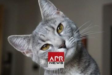 France : Covid-19, un deuxième chat testé positif