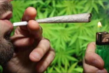 Le Maroc envisage la légalisation du cannabis