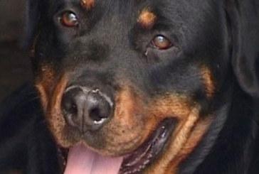 Un chien inscrit sur les listes électorales pour les européennes