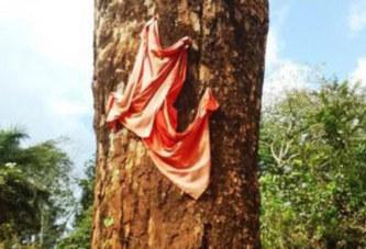 Gabon : L'arbre mystérieux de la Dola