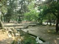【恐怖】倉敷・酒津公園で皮を剥がされた猫が見つかる