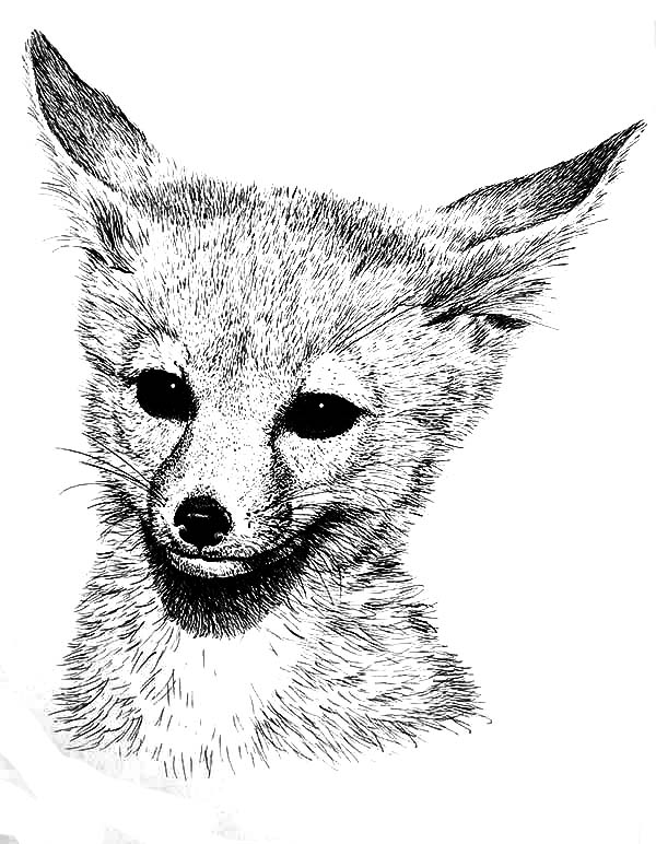Desert Fox Coloring Pages NetArt