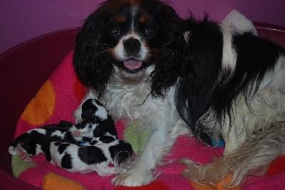 Emma med sina s�ta tjejer