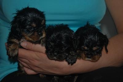 Tre ny badade tjejer, som nu �r 4 veckor.