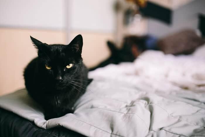 kaboompics.com_Black cat looking at you