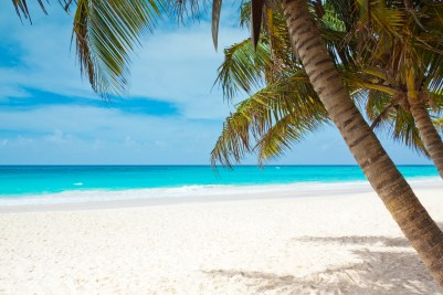 Tropical paradise island, creating online business