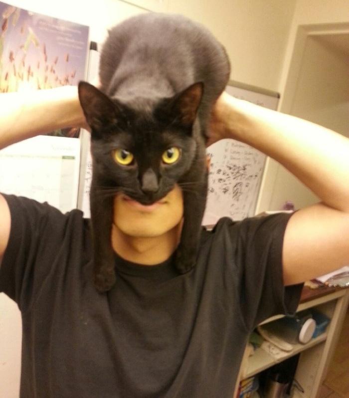 catman_01