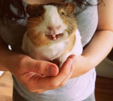 cute-smiling-animals-12