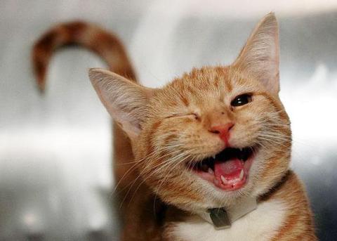 cute-smiling-animals-22
