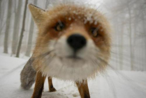 amazing-fox-photos-20-2
