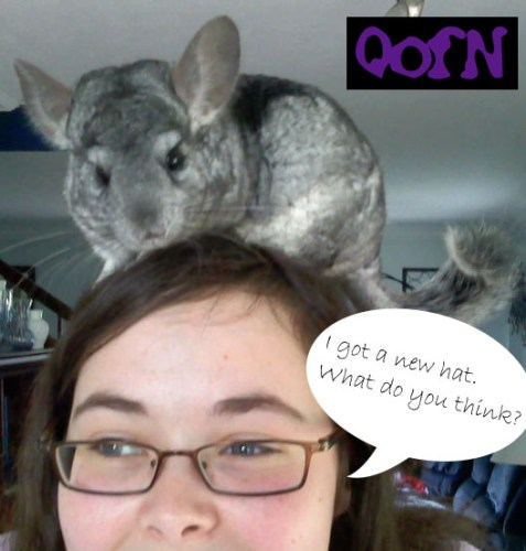 Chinchilla_Hat_by_QueenofNightmares