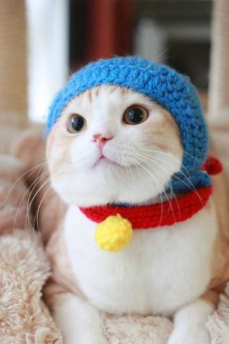 catdoraemon