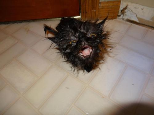 bathcat (10)
