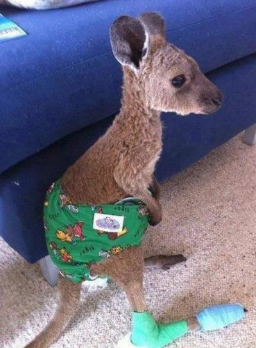 kangaroo1 (1)