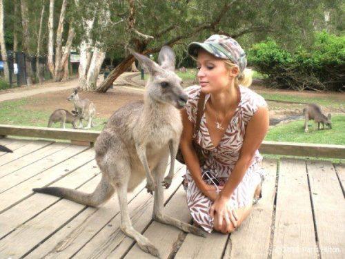 kangaroo1 (15)