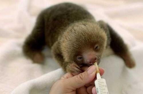 sloth1 (13)