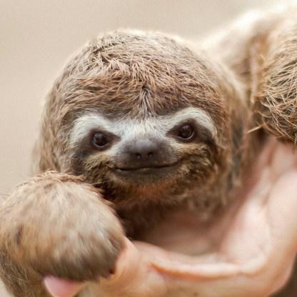 sloth1 (16)