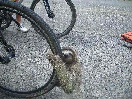 sloth1 (22)