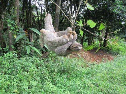 sloth1 (4)