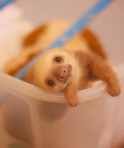 sloth1 (5)