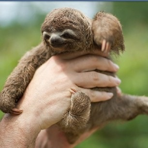 sloth1 (9)