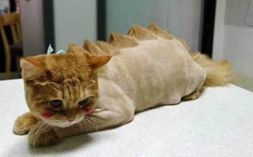cat-hair-cut-1
