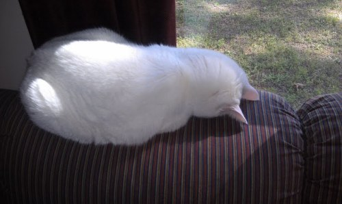 catmonday (11)