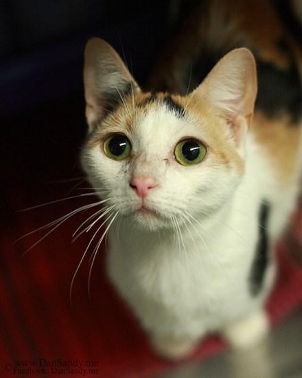 catmonday (15)