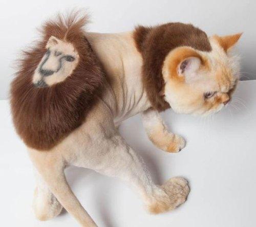 funnycatscut (11)