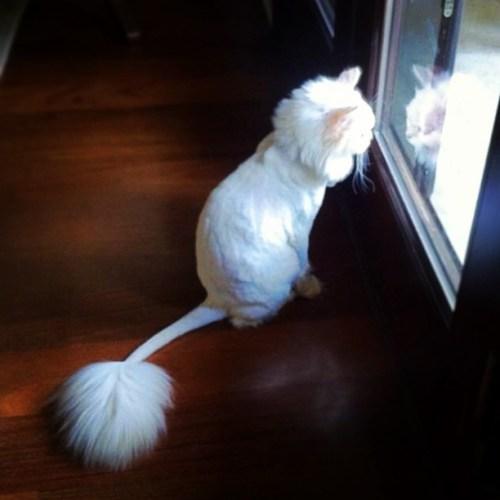 funnycatscut (12)