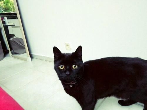 catsdanger (1)
