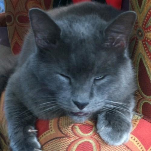 catsdanger (10)