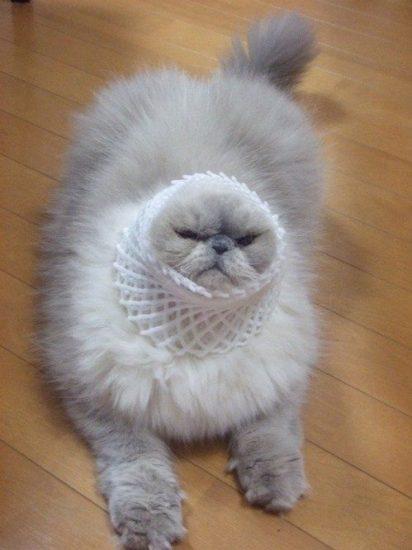 caturday-funny-cats13