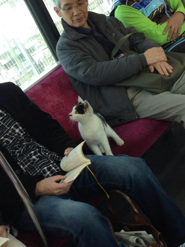 【Twitterすげえ】小田急線に乗ってきた迷子の子猫の画像が大量拡散→飼い主見つかる