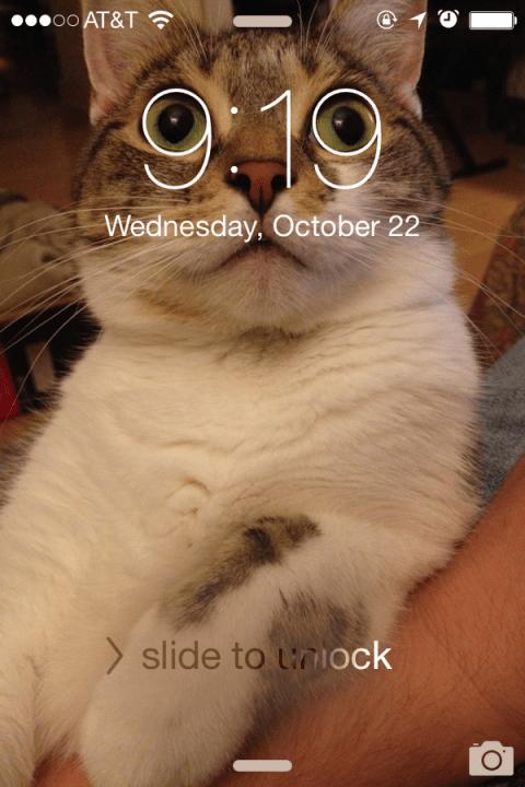 cat_funny (1)