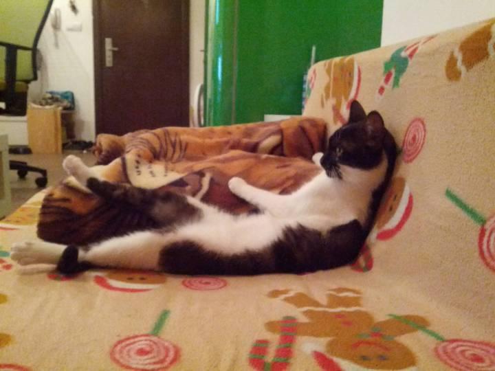 cat_rule (8)