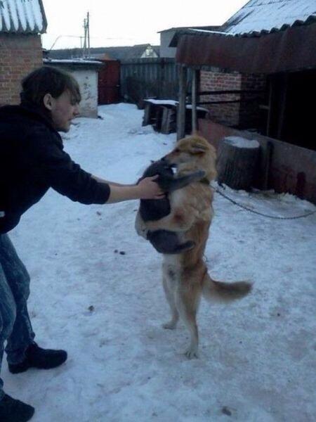 catanddog (14)