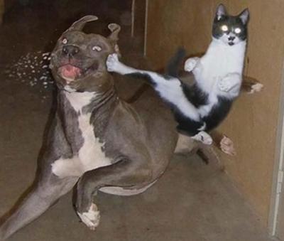 catanddog (17)