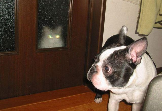 catanddog (18)