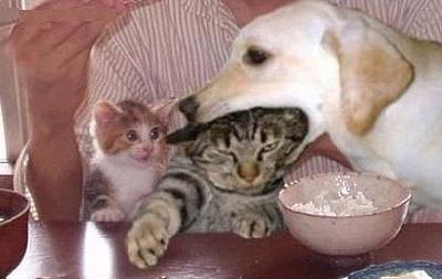 catanddog (19)