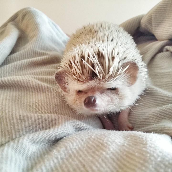 hedgehog _heartwarming (12)