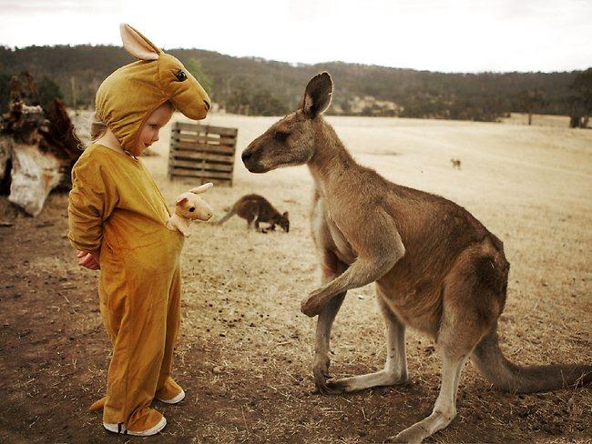 kangaroo_pet (14)