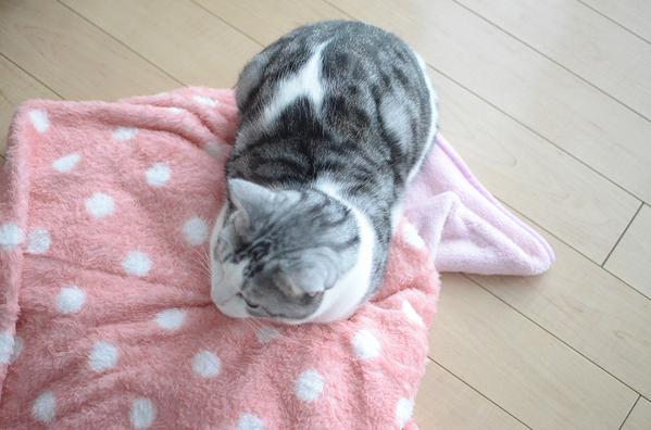 kotatu_cat (7)