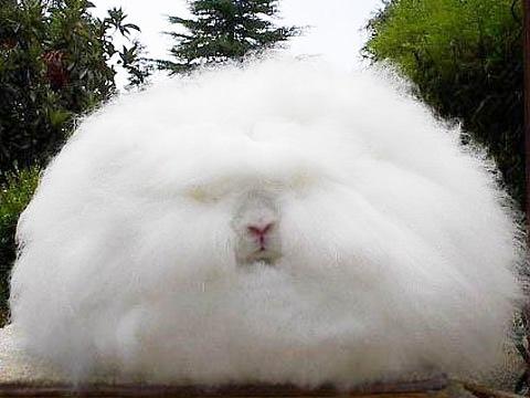 rabbit (16)