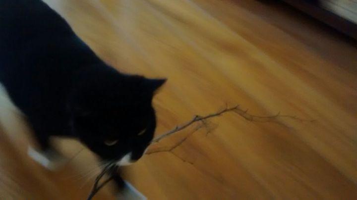 surprisecat (15)
