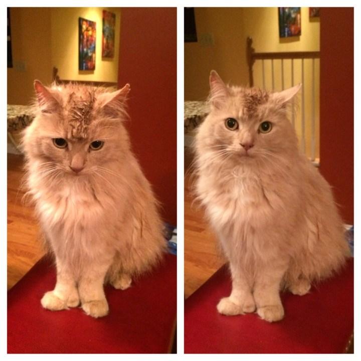 surprisecat (4)