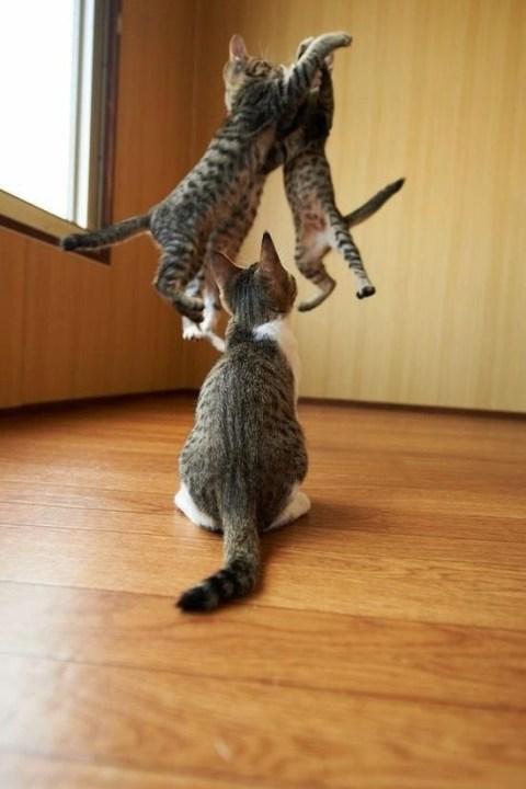 thnkful_cat (6)