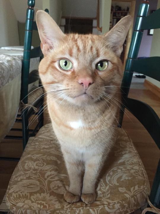 thnkful_cat (8)