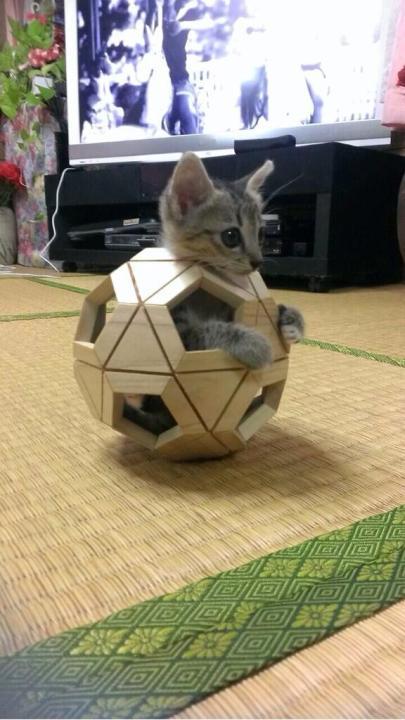 catlife (13)