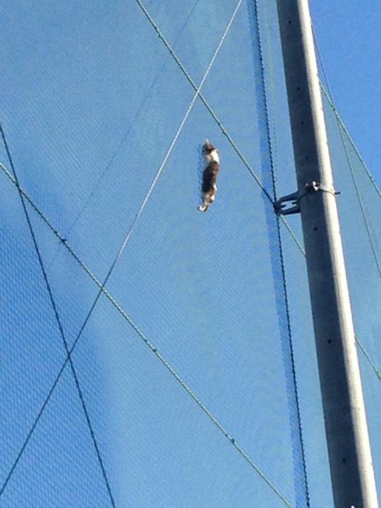 climbcat (3)